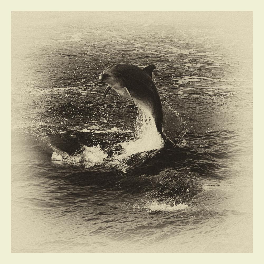 Old Delfin