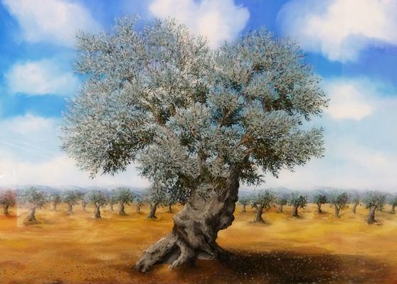 Old Olea tree