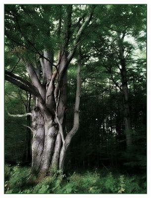 old tree **
