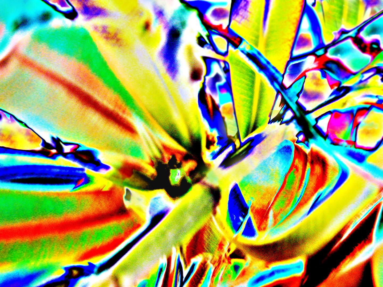 Oleander 2013  #1