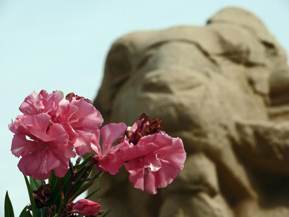 Oleander vor Sphinge...