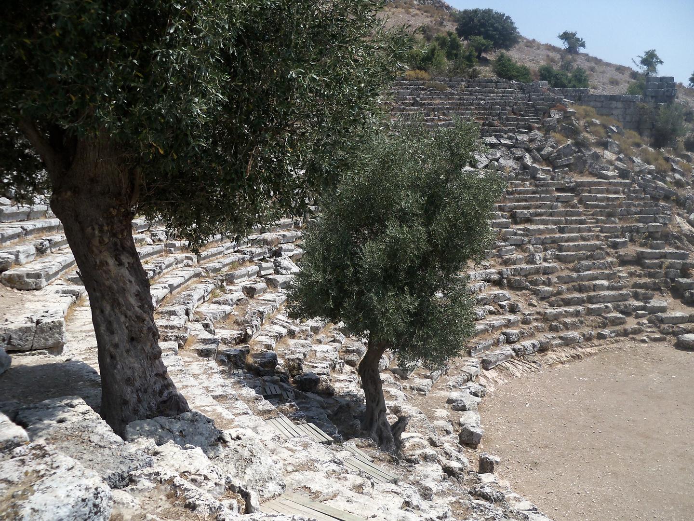 Oliven Bäume in Antikem Theater in Dalian