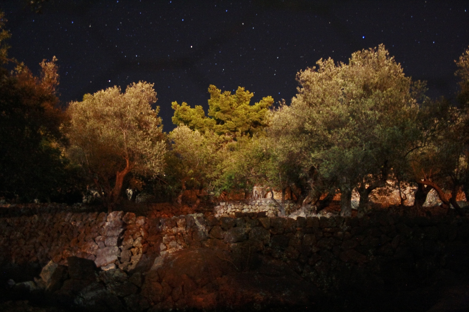 Olivenbäume bei Nacht I