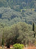 Olivenbäume, Zypressen, ...