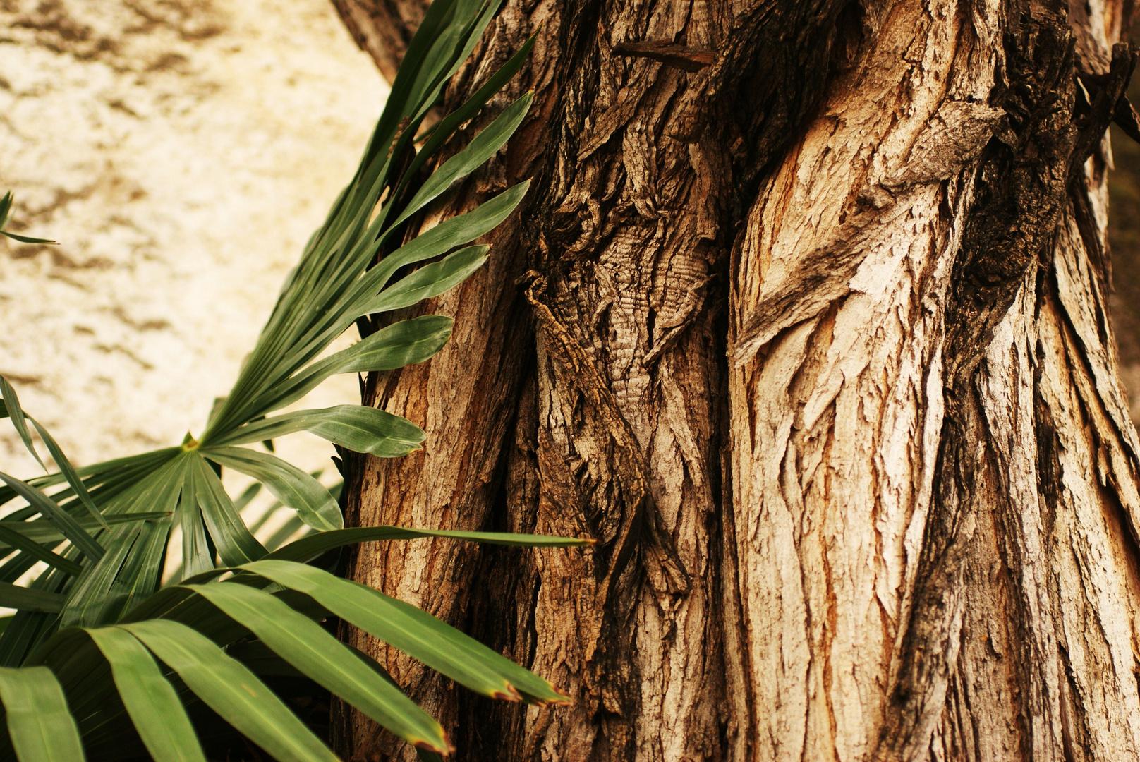 Olivenbaum und Palmenblatt