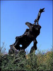 Olivenbaum - verbrannt 2