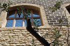 Olivenbaum -Zeichen des Friedens und der Hoffnung