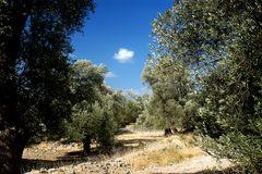 olivenbaumweg