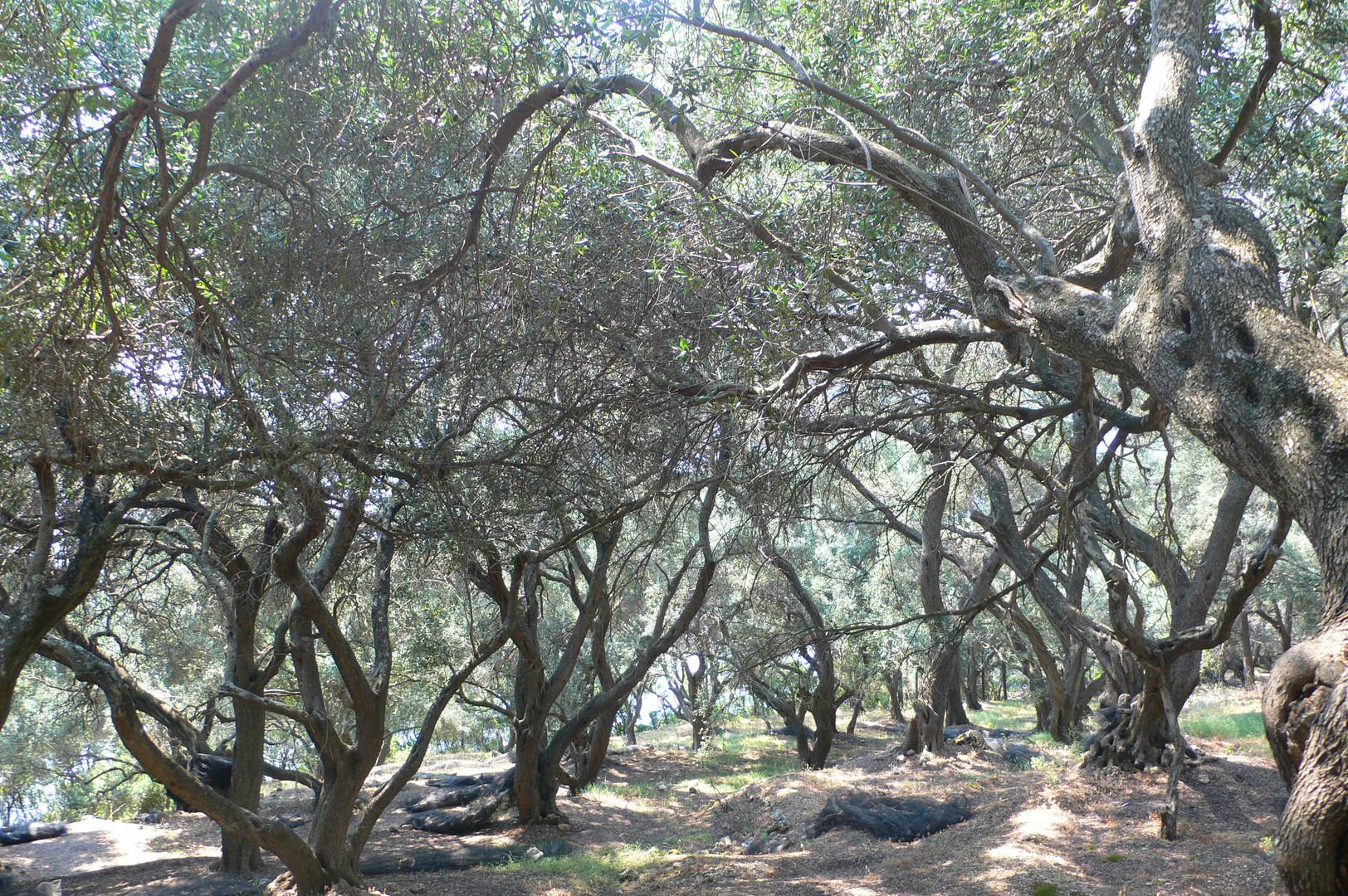 oliverhain