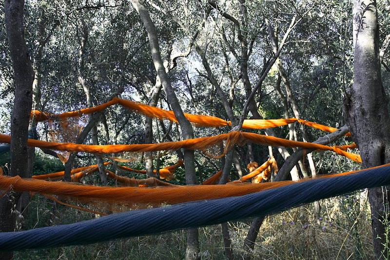 Olives - Cinque Terre