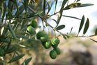 Olives d'Aragon