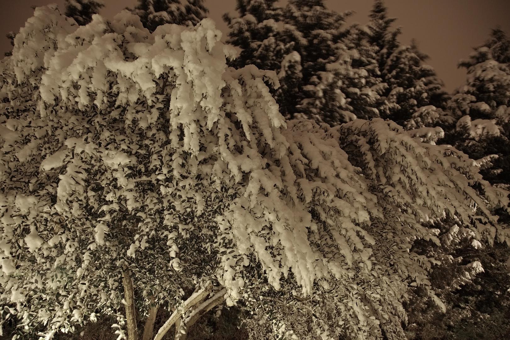 olivier pleur la neige