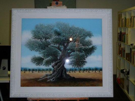 Olivo secolare
