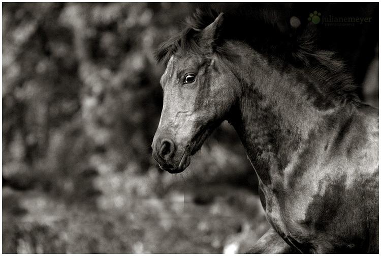 Olles Pony