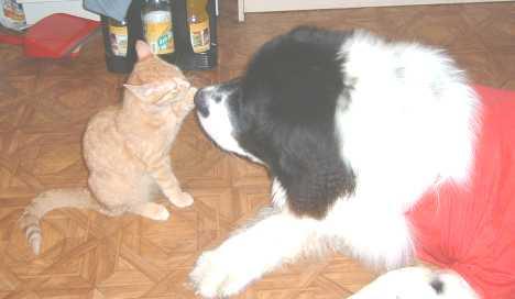 Olly und Simmy