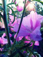 Oma´s Garten