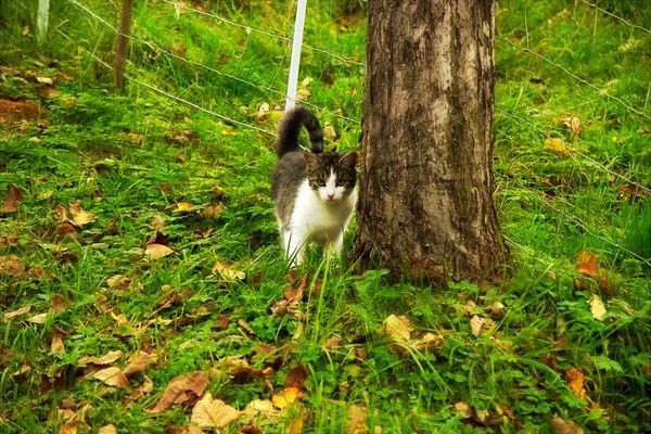 Omas Katze