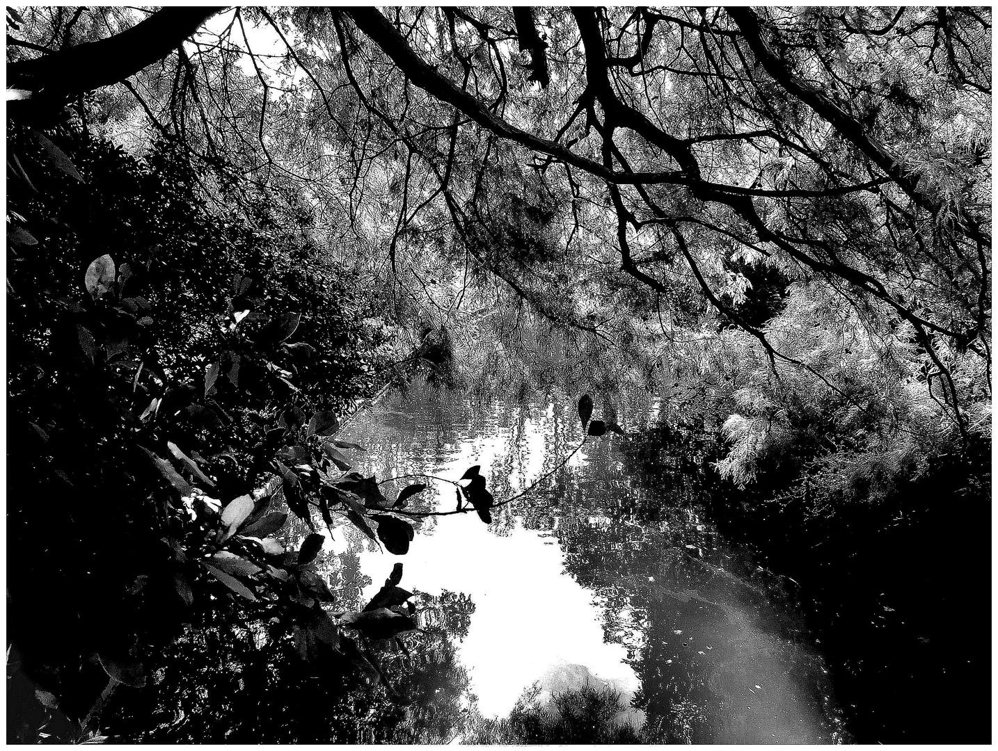 Ombre et lumi re 2 photo et image paysages lacs rivi res cascades fleurs arbres for Jardin ombre et lumiere