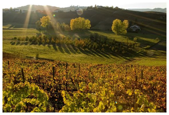 Ombre lunghe...nelle Langhe