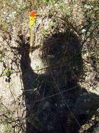 ombre sauvage, s'apprêtant à cueillir un arum