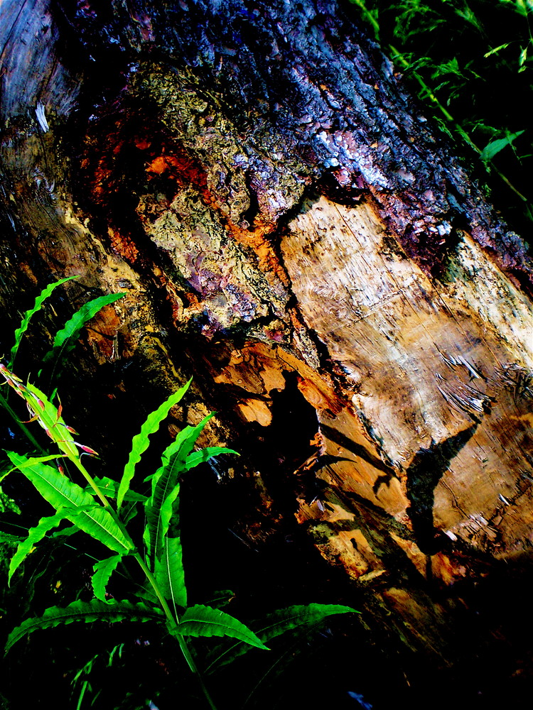 Ombre sur bois