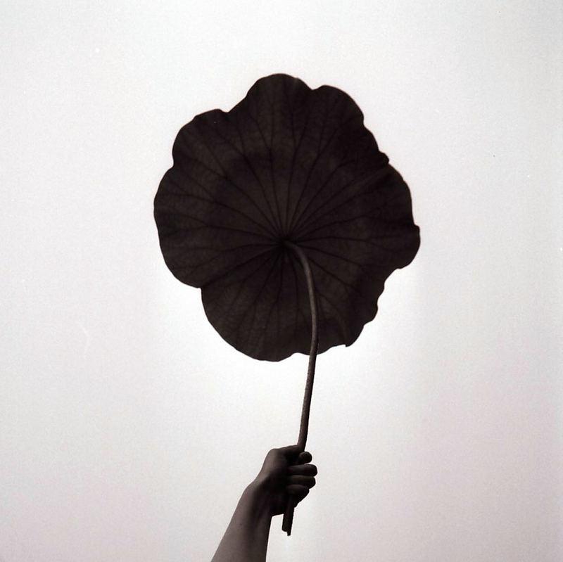 Ombrellone di Lotus