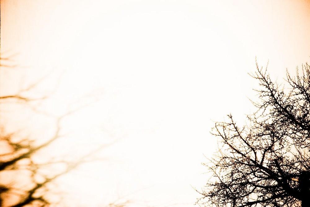 ombres arborescente