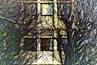 ombres arborescente2