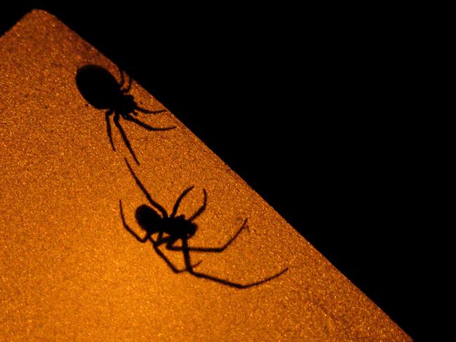 Ombres d'araignées - Leuze-en-Hainaut - Belgique