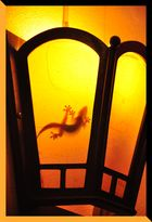 Ombres laotiennes : Gecko