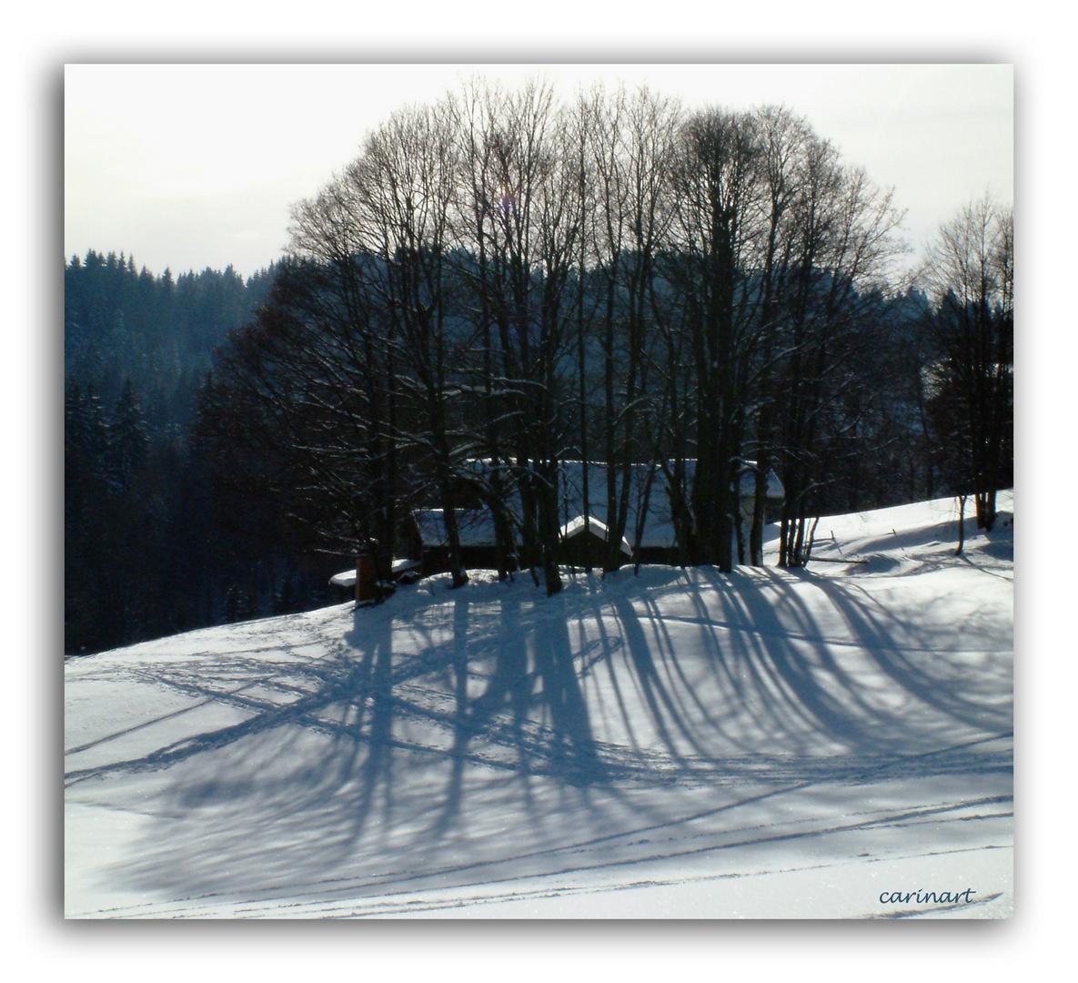 Ombres longues / Lange Schatten