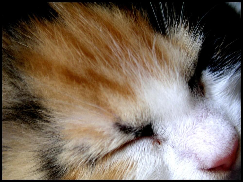 """"""" On dit : la nuit tous les chats sont gris. Faux : tous les chats dorment. """""""