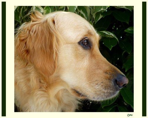 """"""" On dit que je suis un amour de chienne """" ..."""