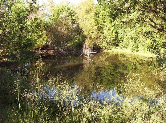 On Hall Pond