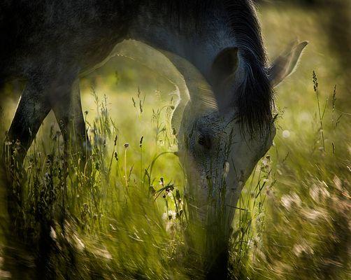 On pasturage