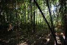 on se croirait dans la jungle
