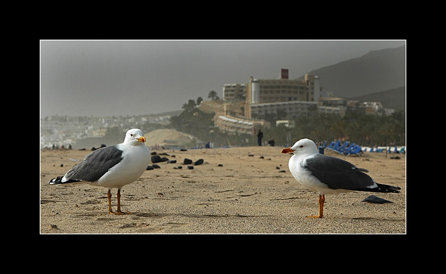 On the beach of Jandia