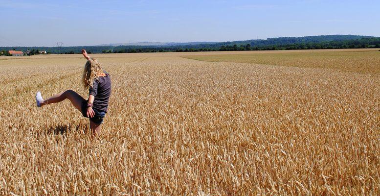 On trouve d'étranges bestioles dans un champ de blé.