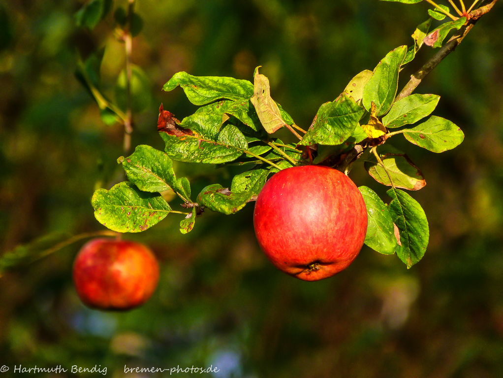one apple a day......