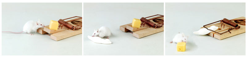 One Day In The Life Of Mighty Mouse