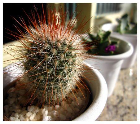 One more cactus