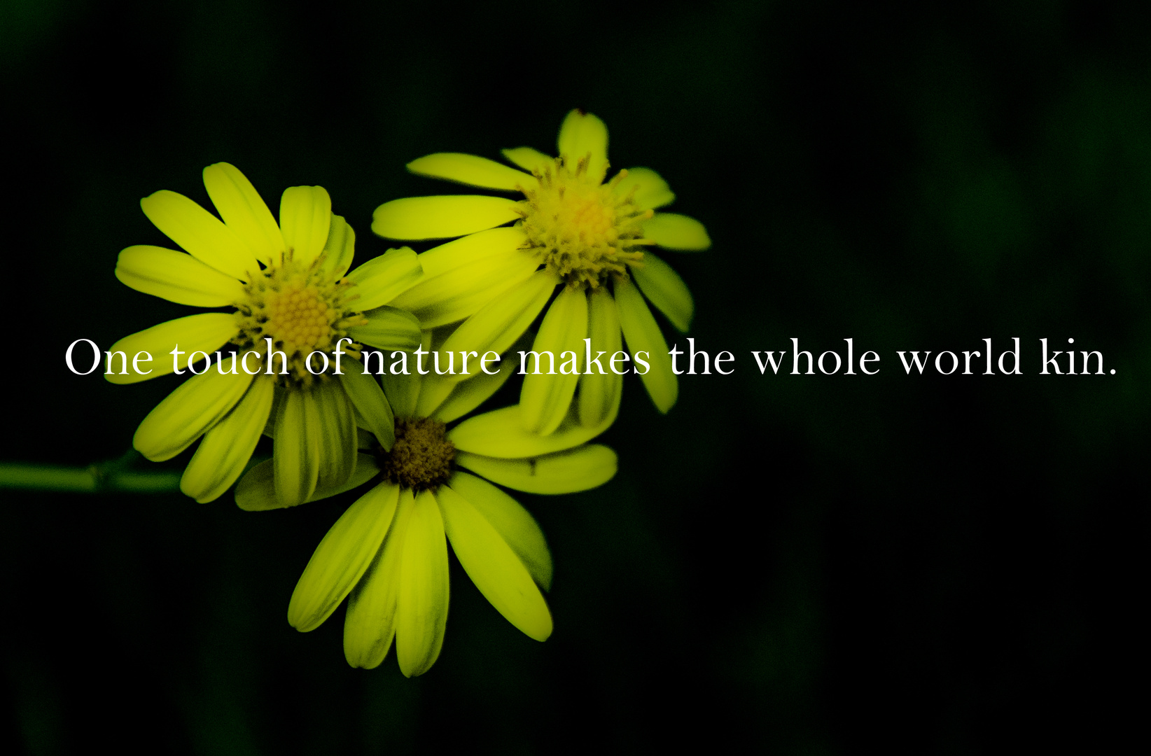 One touch of nature makes the whole world kin. - William Shakespeare