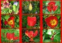 one tulip life von Vera M. Shulga