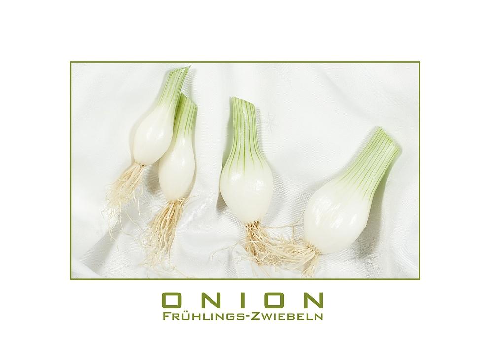 Onion - Die Frühlingszwiebel