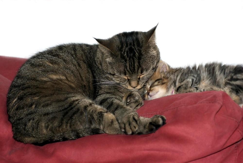 Onkel Caruso bewacht Kassandra´s Schlaf