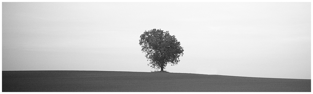 ...only a tree...