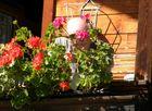 Opa beim Blumengießen