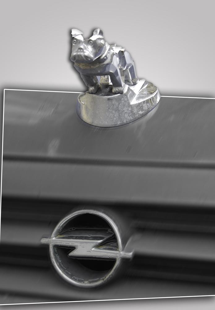 Opel-(Pit)-bull