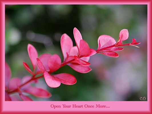 Open Your Heart Once More..