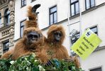 Orang-Utans auf der Leipziger Straße in Halle/S